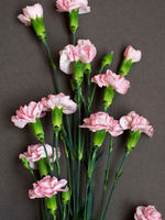 Pink carnation flowers on paper