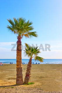 Palm trees by the sea on the beach