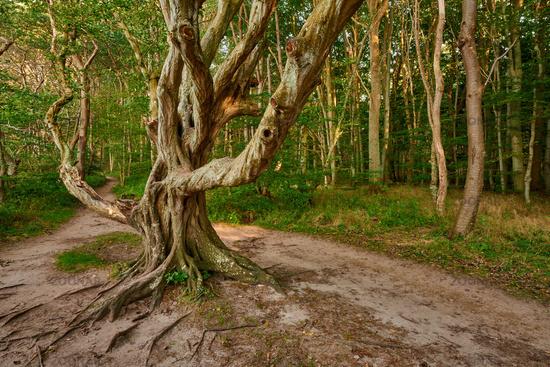 Ruegen Germany Ghost Forest