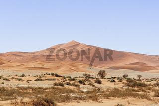 Duenen mit Akazien in der Namib Wueste