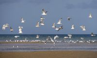 seagulls flying along the beach