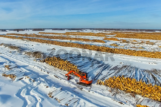 The felled trees lie under the open sky. Deforestation in Russia