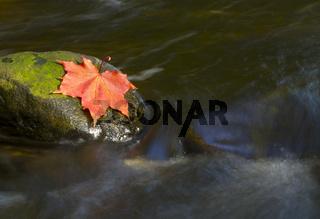 Herbstliches Laub auf einem Stein in einem Bachlauf