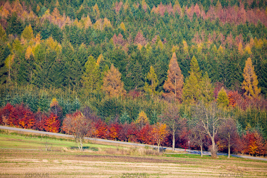 Autumn forest nature. Vivid fall colors