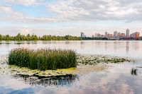 Scirpus in the Dnieper River in Kiev