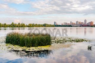 Scirpus in the Dnieper River in Kiev