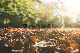 fallen autumn leaves on ground against green trees in sunlight