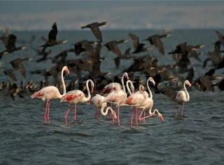 Flamingos in the wind standing in the water