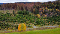 New mixed forest with death wood in the background - Aerial view -
