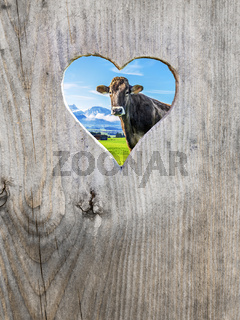 heart in door with cow