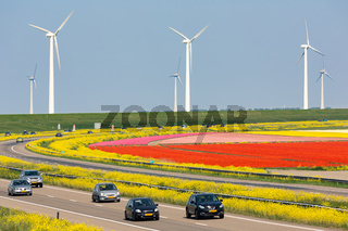 Dutch motorway near lelystad along colorful tulip fields and windturbines