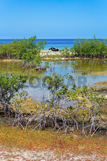Mangrove plants at shore of island Bonaire