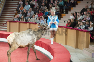 Belarus, Gomil, February 16, 2019. State Circus. Program Bravo Bravissimo.Circus female trainer with reindeer