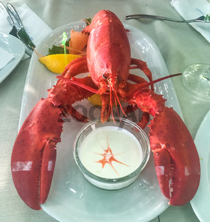 Close up of fresh steamed lobster