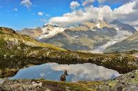 Alpine goat among the rocks wildlife scene with beautiful animal
