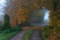 Forest path on a foggy autumn morning near Schrobenhausen, Bavaria, Germany