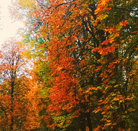 Autumn nature in park, fall leaves and trees outdoors