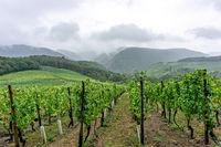 Vineyard in the Ahr valley in Germany