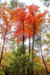Algonquin National Park in autumn
