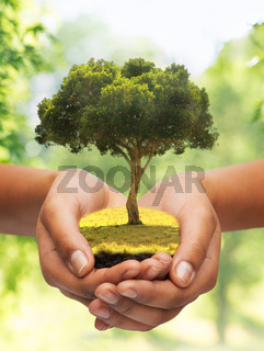 close up of hands holding tree