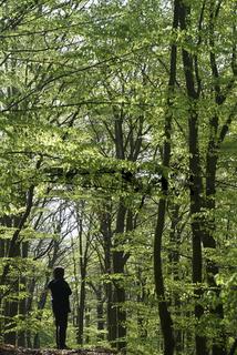 Kellerwald National Park,