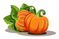Pumpkins with leaves isolated on white background