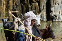 Shepherd and cattle drinking from the river, Ethiopia