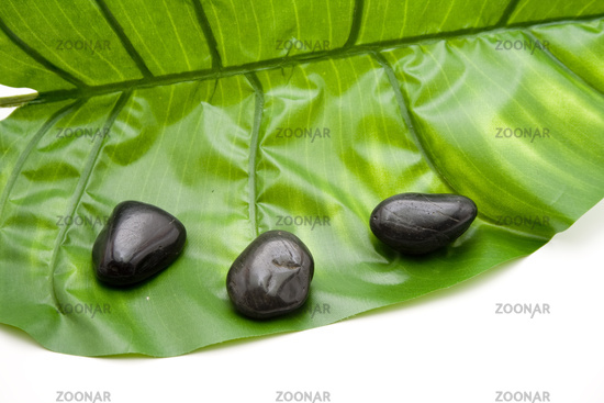 Black stones with plant sheet