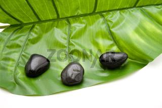 Schwarze Steine mit Pflanzenblatt