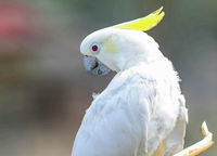 White parrot side portrait