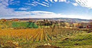 Bilogora vineyard landscape in Croatia