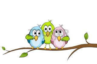 Drei lustige Vögel