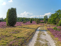 Hiking trail trough the landscape of Lueneburg Heath, Lower Saxony, Germany