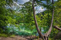 Twisted rots and trees on the edge of turquoise pond in Plitvice Lakes