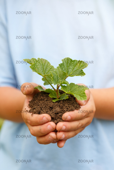 New life plant child hands holding tree nature living copyspace copy space concept garden