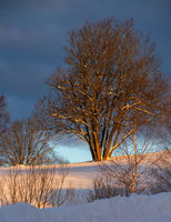 Winter snowy hills and tree in first sunrise sunlight. Small and quiet alpine village outskirts.