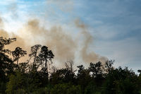 Smoke development in a forest fire