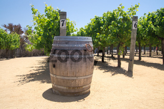 Wine barrel and Grapevines