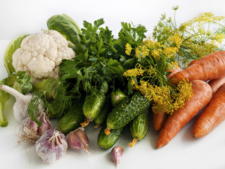Vegetables of the summer harvest on the table