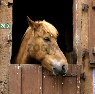 Pferdekopf, Stalltuere