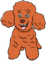 poodle toy dog cartoon animal character
