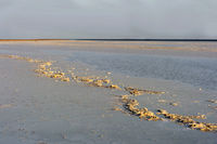 Salt crust on Lake Assale, located more than 100m below sea level, Danakil depression, Ethiopia