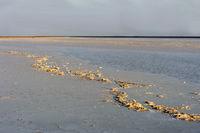 Kruste aus Steinsalz auf dem Assale Salzsee