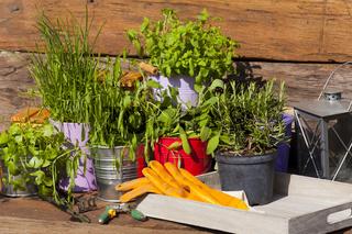 Frische Kräuter stehen auf Tisch vor einer Gartenlaube