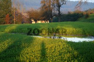Bauernhof mit Feld, Lacke und Spiegelung