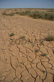 parched lakebed in the semi-desert with cracks and sparse vegetation
