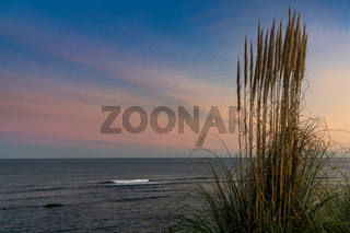 tall beachgrass swaying in the wind with beautiful beach and ocean landscape at sunrise