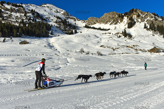 Musher and his dog sled team on the Sommand Plateau,Haute-Savoie, France