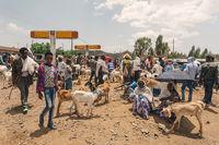 Ethiopian people on animal market, Ethiopia Africa