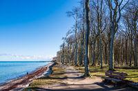 Gespensterwald an der Küste der Ostsee in Nienhagen